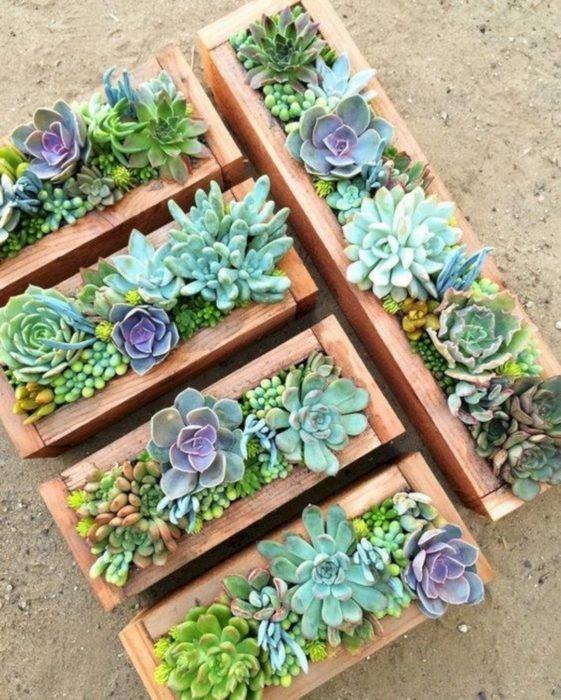 Suculentas decorativas puestas en cajas