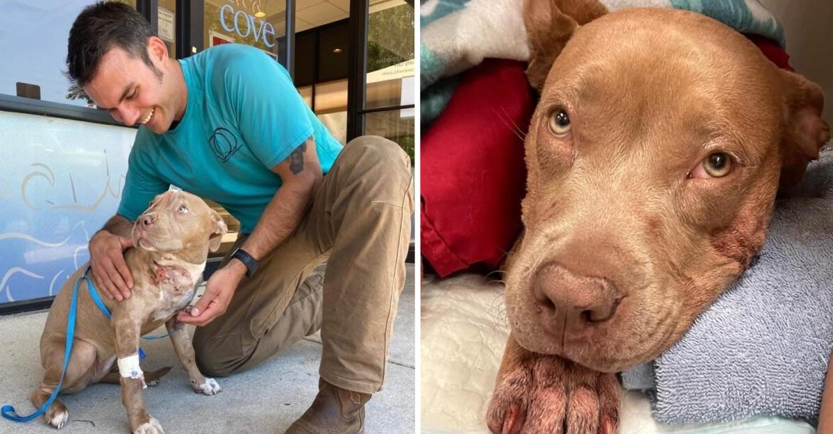 Perro se escondió bajo un coche tras ser acuchillado. Su rescatista lo ayudó y después dio un hogar