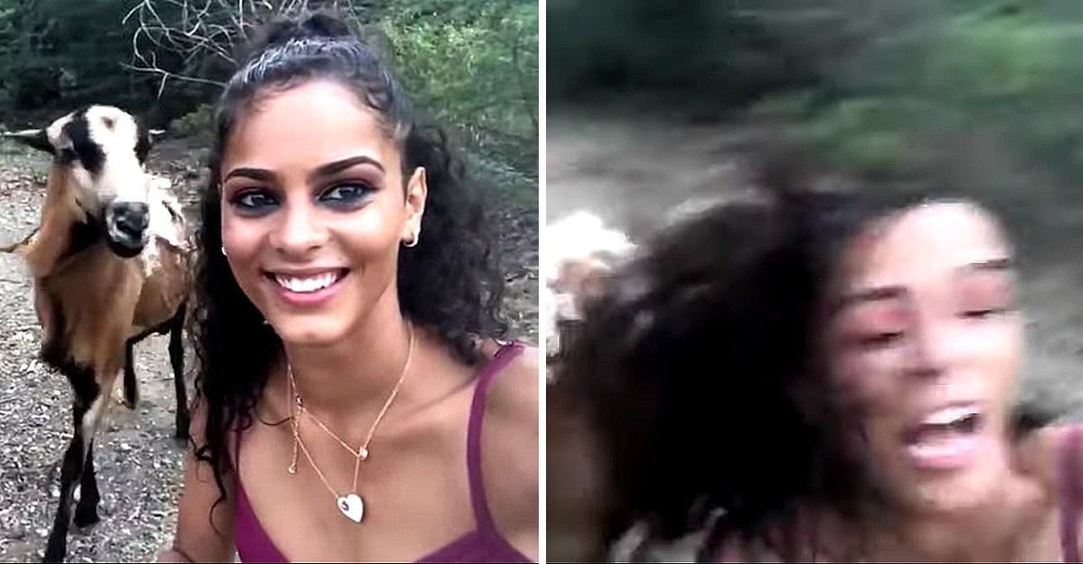 Se fotografió con una cabra segundos antes de ser atacada y terminar en el suelo. Le dio un cabezazo