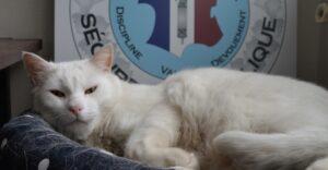 Gato callejero encontró nuevo hogar en una comisaría en Francia. Llevó tranquilidad a los oficiales