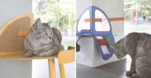 Estudiante de Singapur diseña accesorios para que gatos callejeros jueguen y duerman. Los atiende