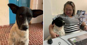 Perrito callejero sin un ojo consiguió hogar en una alcaldía. Acompaña a sus amigos en el trabajo