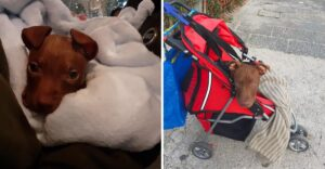 Perrito abandonado en una caja perdió la capacidad de caminar. Lucha por poder correr de nuevo