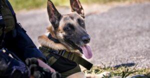 Perro policía encontró a joven desparecida en un bosque. Estaba inconsciente y acostada entre hojas