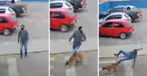 """Perrito """"atropelló"""" a un hombre en la calle y lo dejó fracturado. Estaba persiguiendo a sus dueños"""