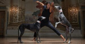 """""""Son almas mágicas"""": Bailarín compartió escenario con galgos rescatados para salvarlos del maltrato"""